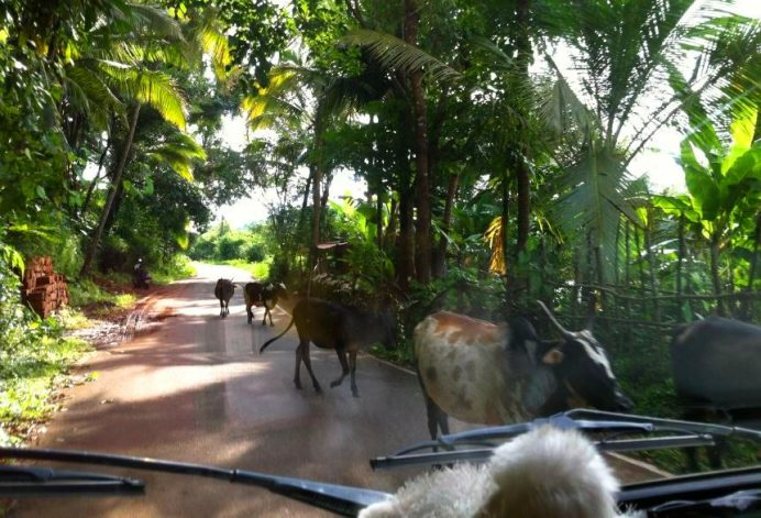 Goa Yolları