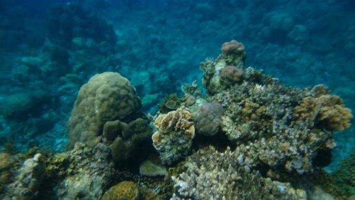 Resifler