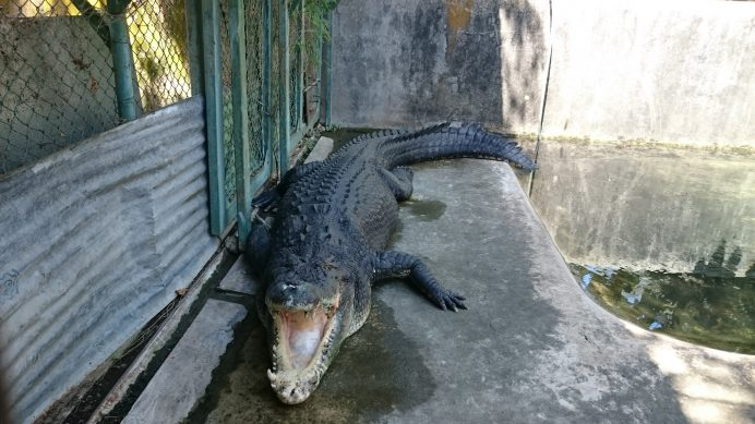 Crocodile_Farm