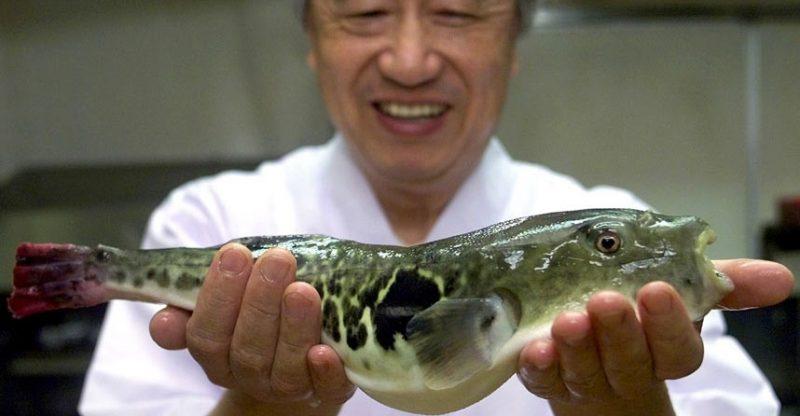 Fugu Balığı