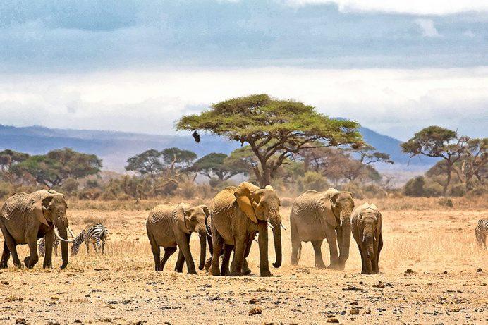 Afrika manzaraları