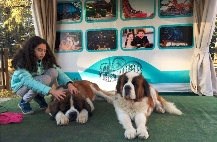 Mtatsiminda Parkındaki Köpekler