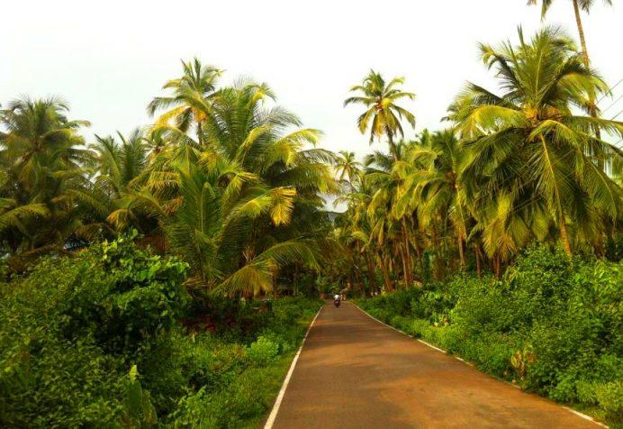 Goa-Hindistan (Evet çok pis. Ama böyle yerler de göreceksin.)
