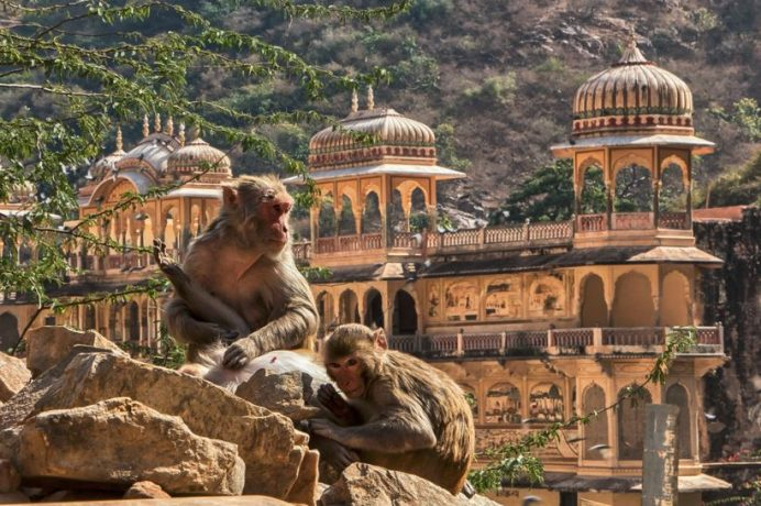 jaipur - Galtaji - ilkbahar - hindistan