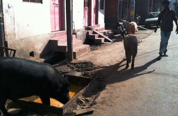 Nahargarh Fort'a Giderken Sıradan Şeyler