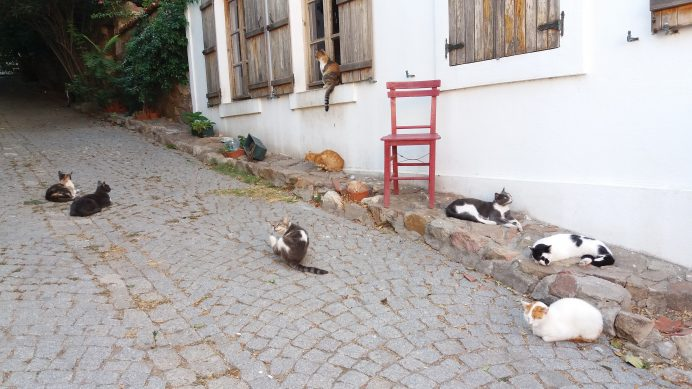 kedilerin resimi