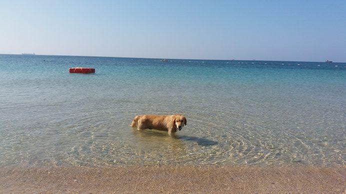 Ayazma-Plajı Bozcaada