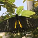 Kelebekler_Vadisi