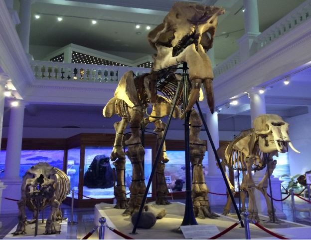 Bükreş Gezilecek Yerler: Grigora Antipa National Museum