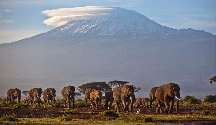 Kilimanjaro Dağının Serengeti Milli Parkından görünümü.