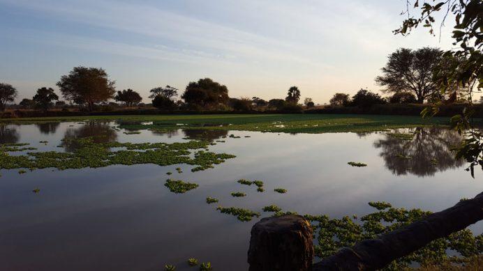Mikumi Ulusal Parkı hipopotam havuzu - Tanzanya.