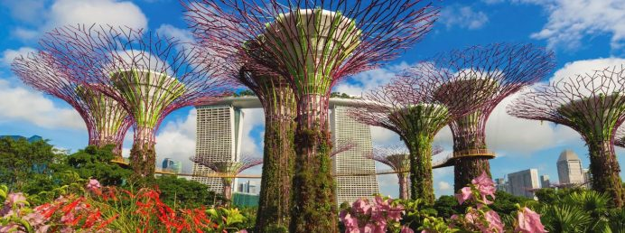 Singapur-ağaçları