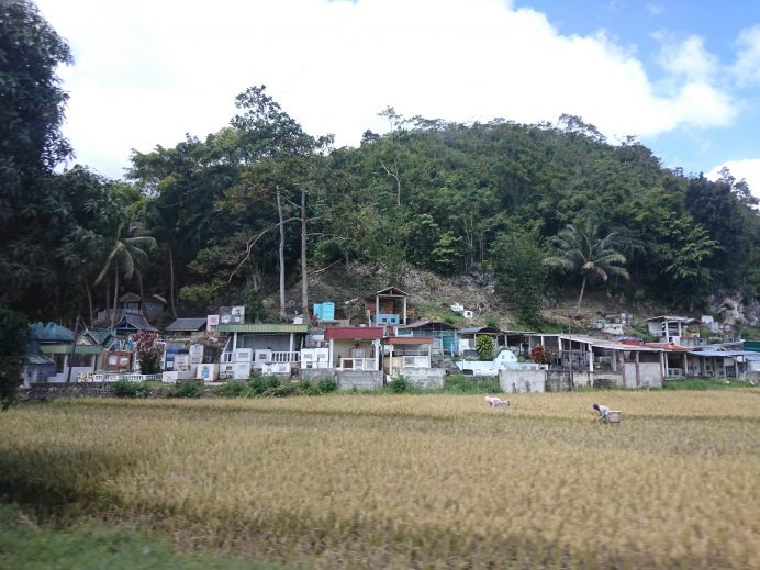 Filipinler-Pirinç-Tarlaları