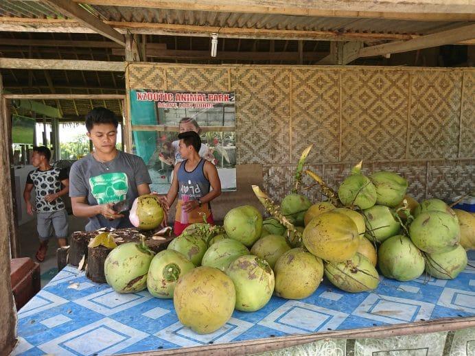 Filipinler-Hindistan-Cevizi