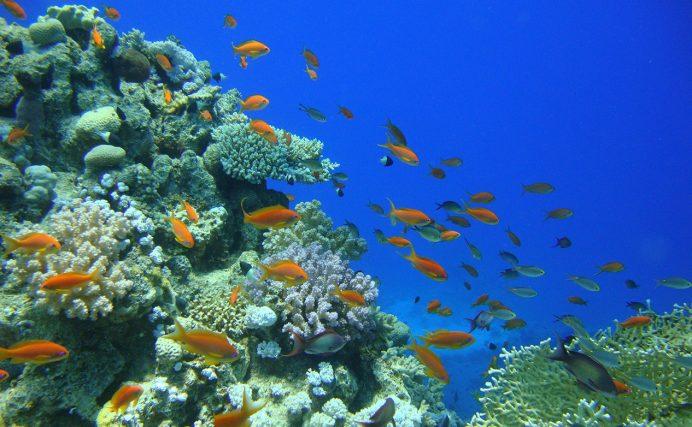 Underwater_Thailand