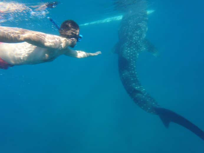 Whale-Sharks-Watching-Cebu