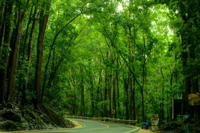 Man-Made-Forest-Bohol