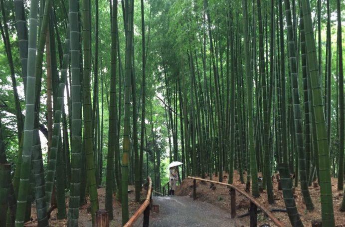 bambuforest kyoto
