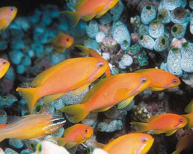 Maldiv-dalış