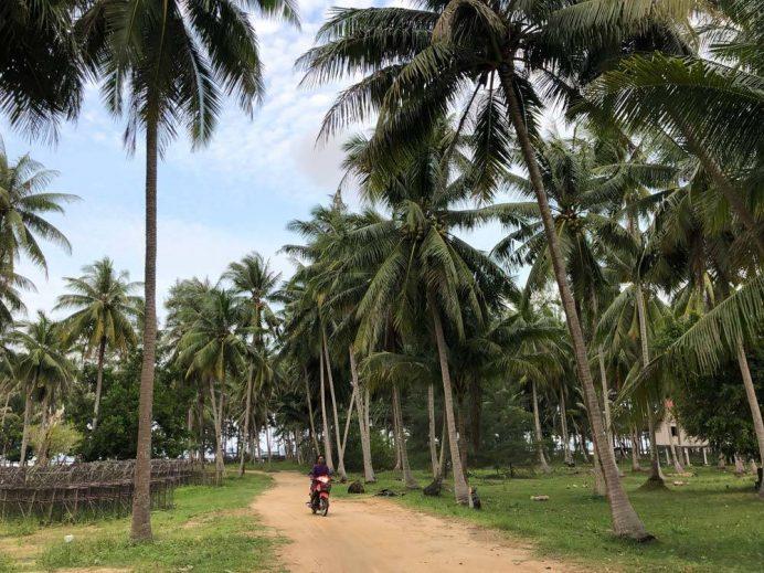 Koh Phangan adası