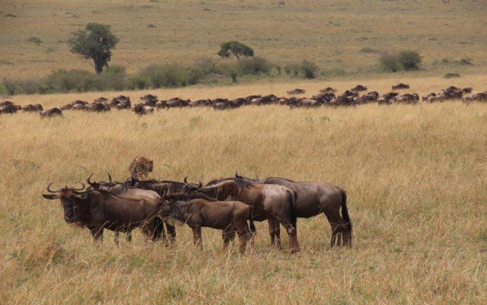 afrika safari hayvanları