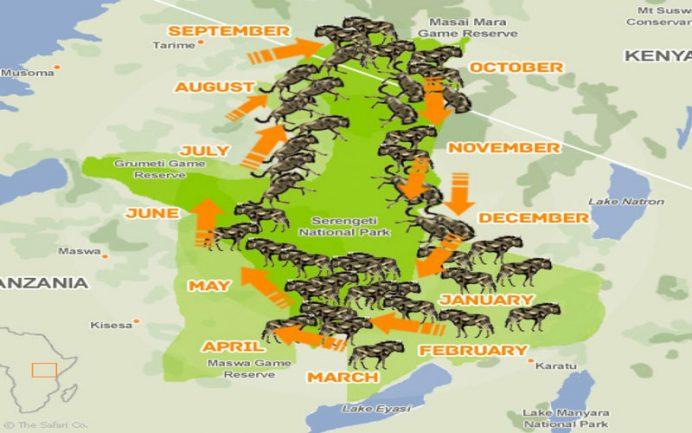 afrika safari turu büyük göç rotası
